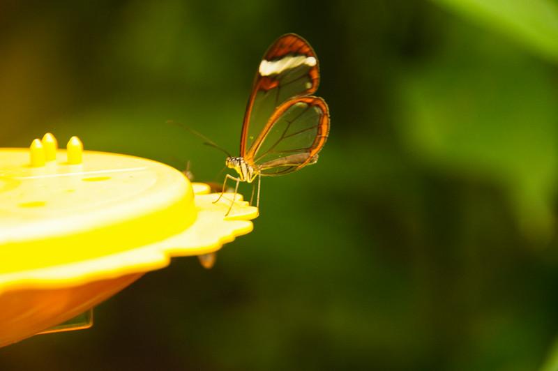 Butterflies-23