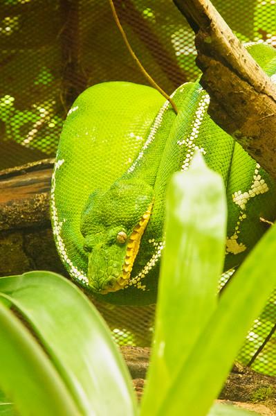 Reptile Park-10