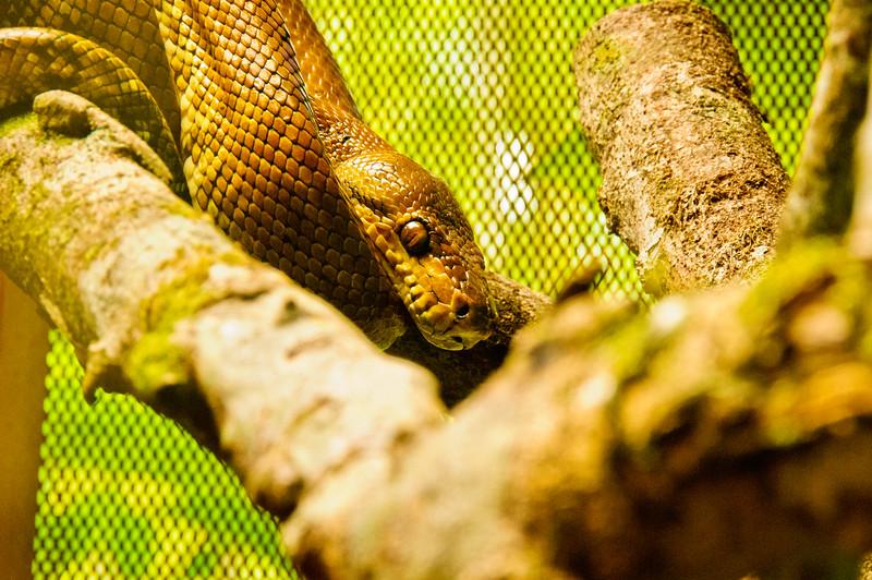 Reptile Park-13
