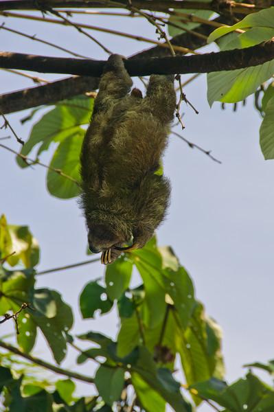 Sloths and monkeys-1