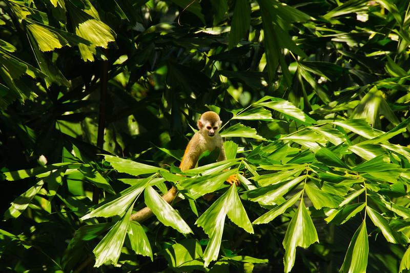 Sloths and monkeys-15