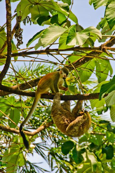 Sloths and monkeys-8