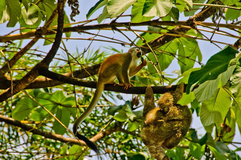 Sloths and monkeys-7