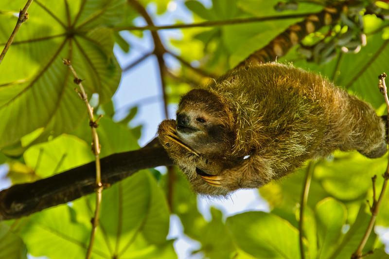 Sloths and monkeys-4