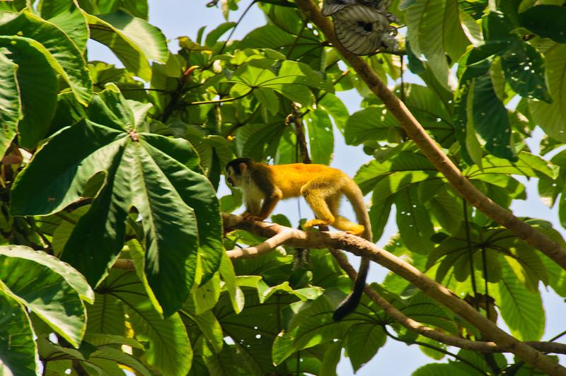 Sloths and monkeys-13