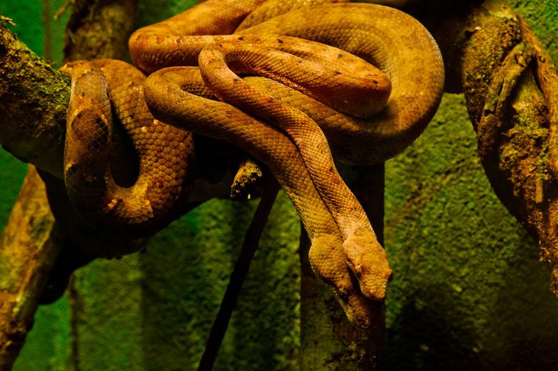 Reptile Park-14