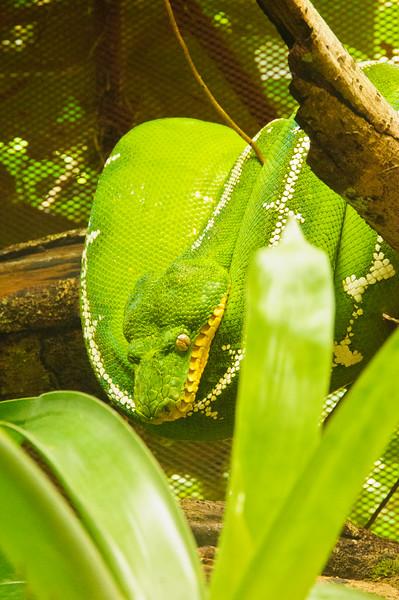 Reptile Park-11