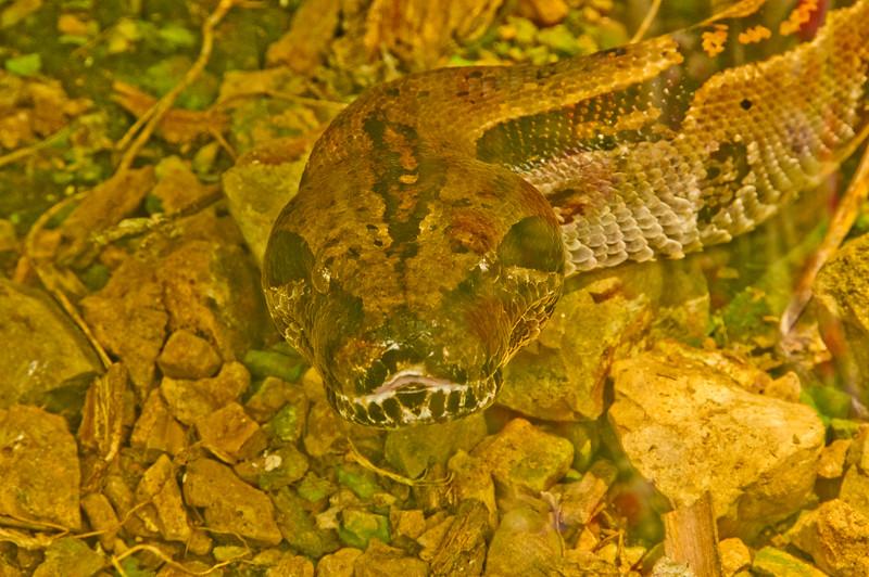 Reptile Park-2