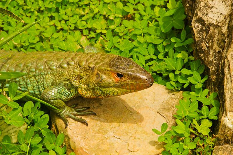 Reptile Park-7