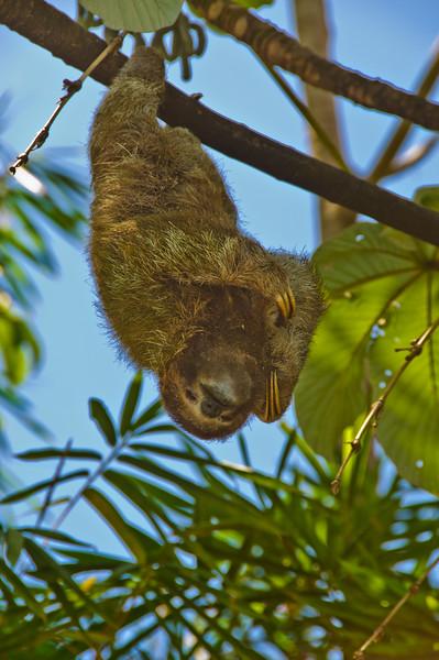 Sloths and monkeys-3