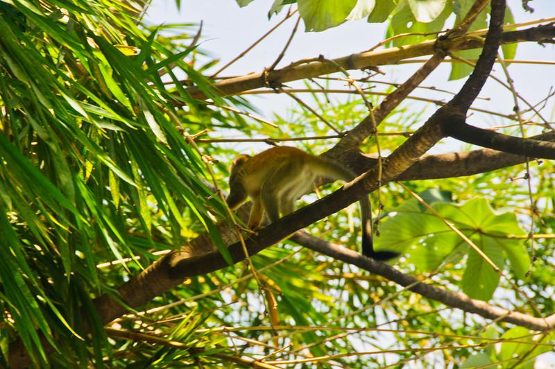 Sloths and monkeys-9