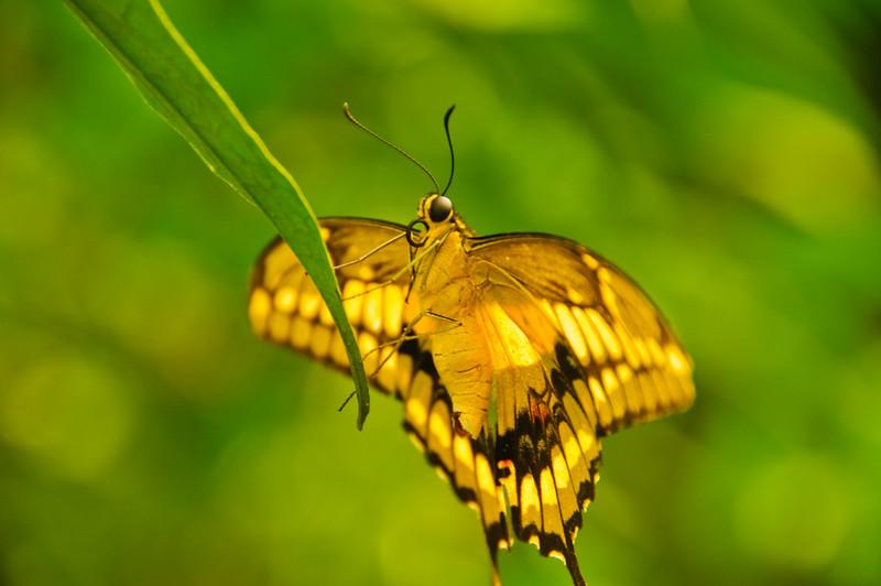 Butterflies-32