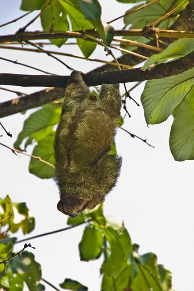 Sloths and monkeys-2