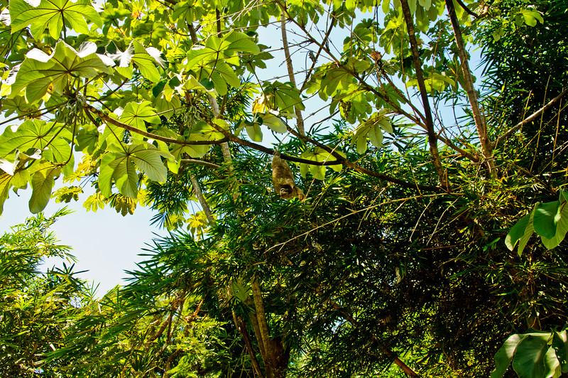 Sloths and monkeys-6