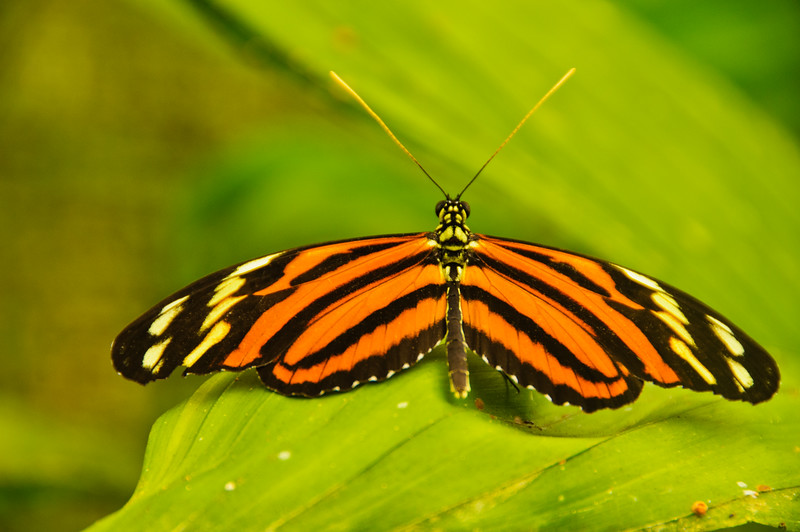 Butterflies-17
