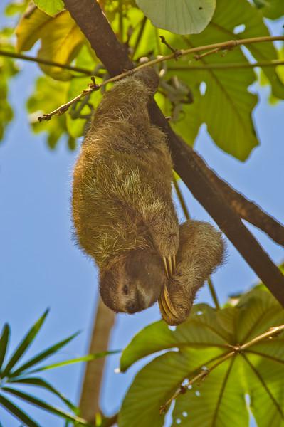 Sloths and monkeys-5