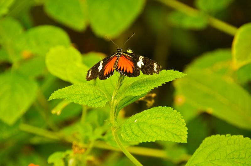 Butterflies-26