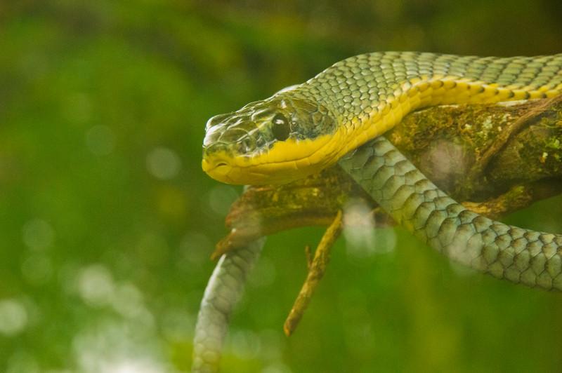 Reptile Park-18