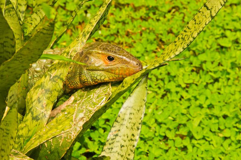 Reptile Park-4