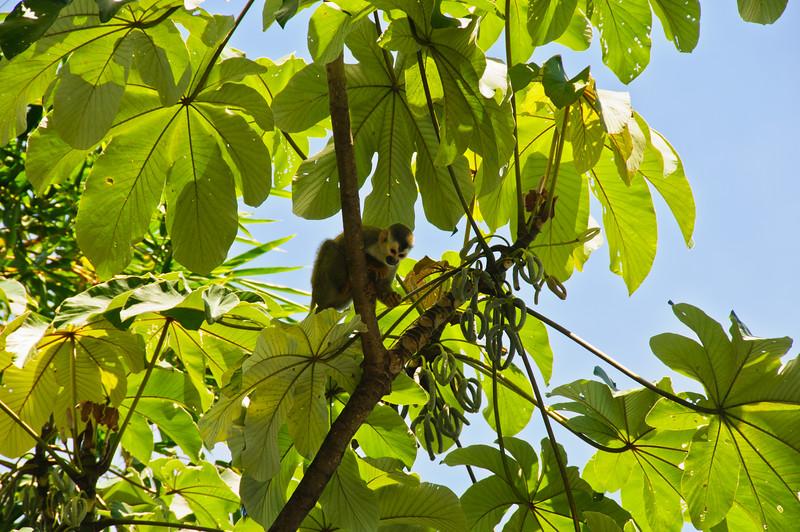 Sloths and monkeys-10