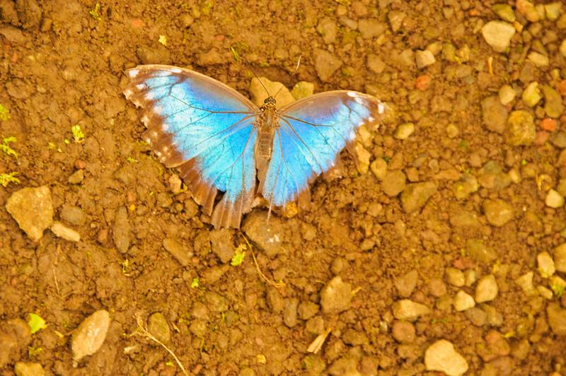 Butterflies-22