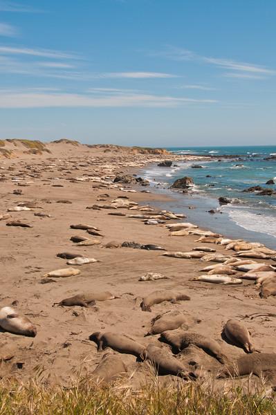 Elephant Seals (9 of 11)