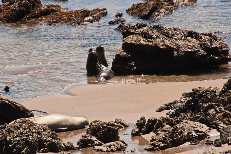 Elephant Seals (6 of 11)