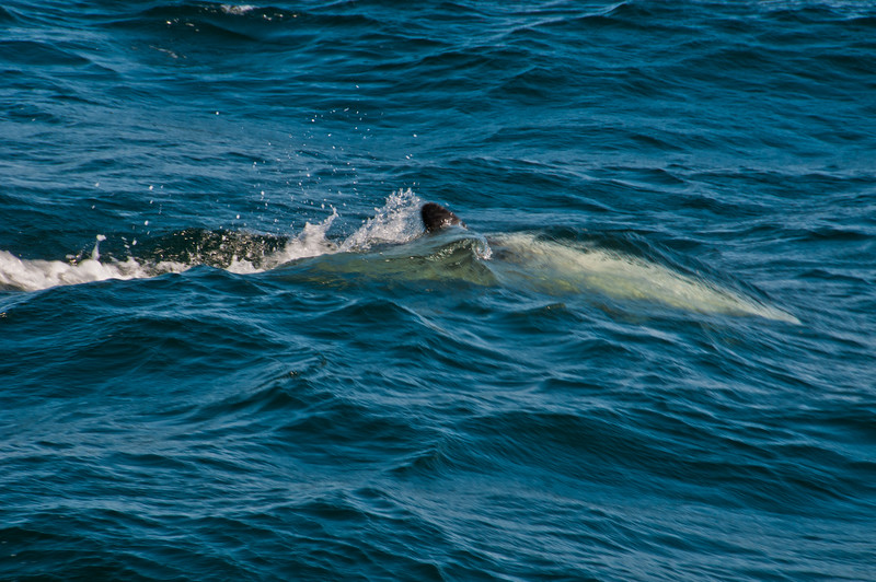 Whale Watching (23 of 36)