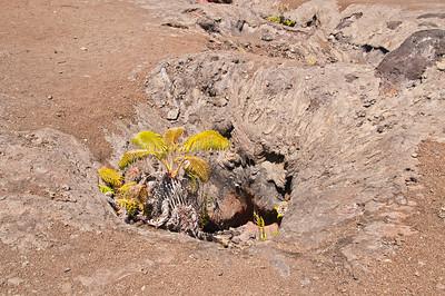 Mauna Ulu (18 of 30)