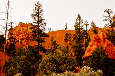 Bryce Canyon (24 of 26)