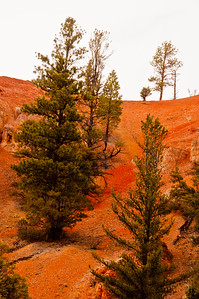 Bryce Canyon (23 of 26)