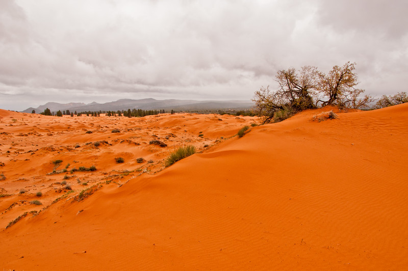 Coral Pink Sand Dunes (8 of 10)