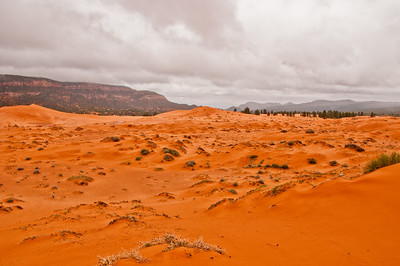 Coral Pink Sand Dunes (7 of 10)