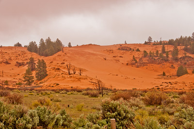 Coral Pink Sand Dunes (2 of 10)