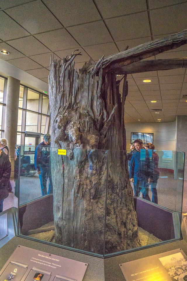 At Mount St. Helens Visitor Centre
