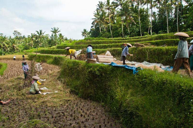 Bali - paddy field walk (23 of 31)