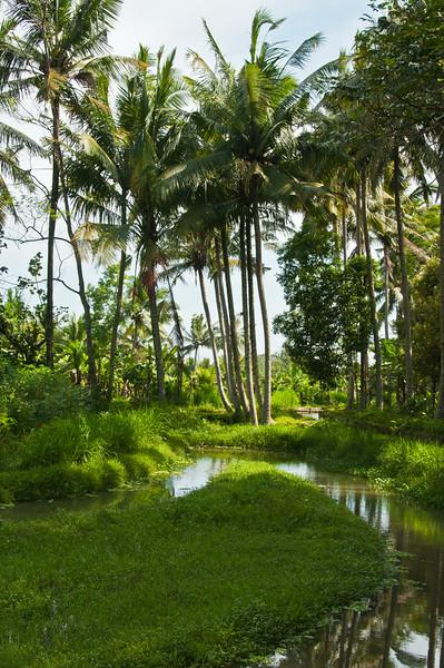 Bali - paddy field walk (28 of 31)