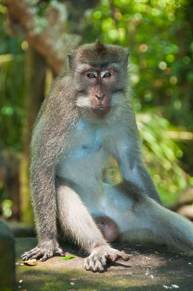 Bali - Ubud walk (1 of 31)