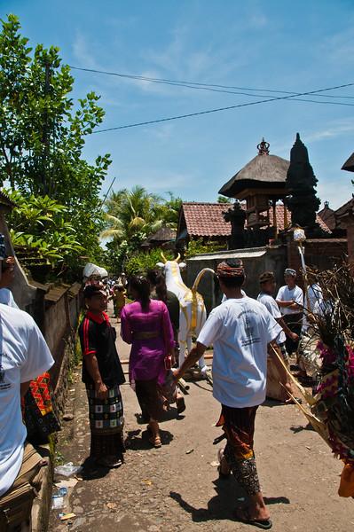 Bali - Cremation (7 of 40)