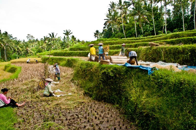 Bali - paddy field walk (22 of 31)