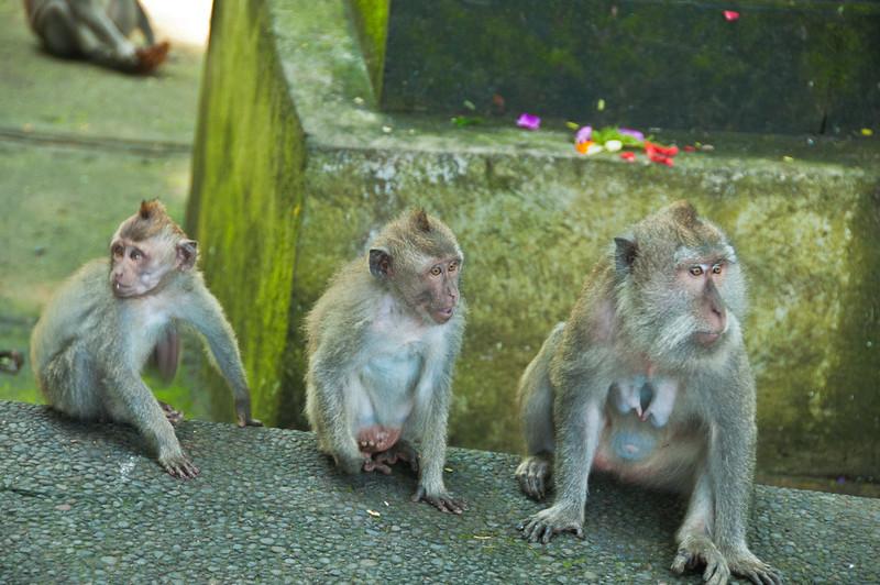 Bali - Ubud walk (2 of 31)
