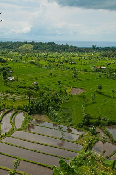 View near Tirta Gangga