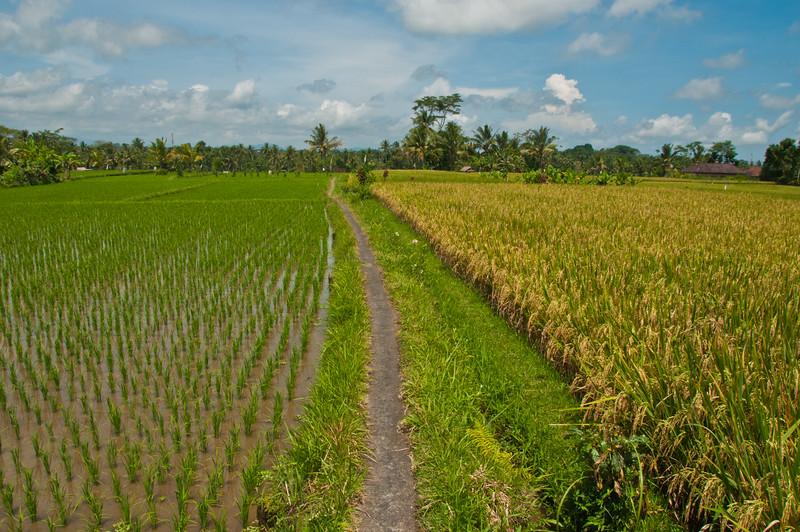 Bali - Ubud walk (27 of 31)
