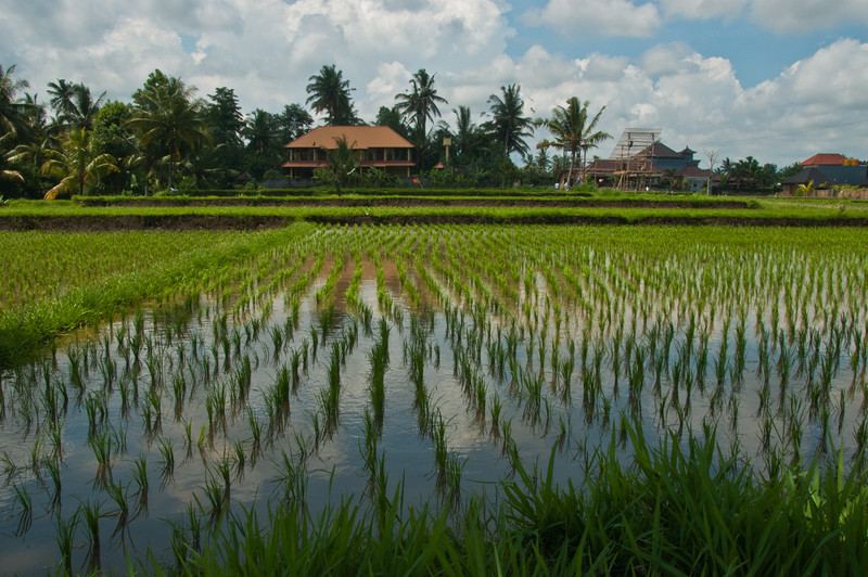 Bali - Ubud walk (26 of 31)