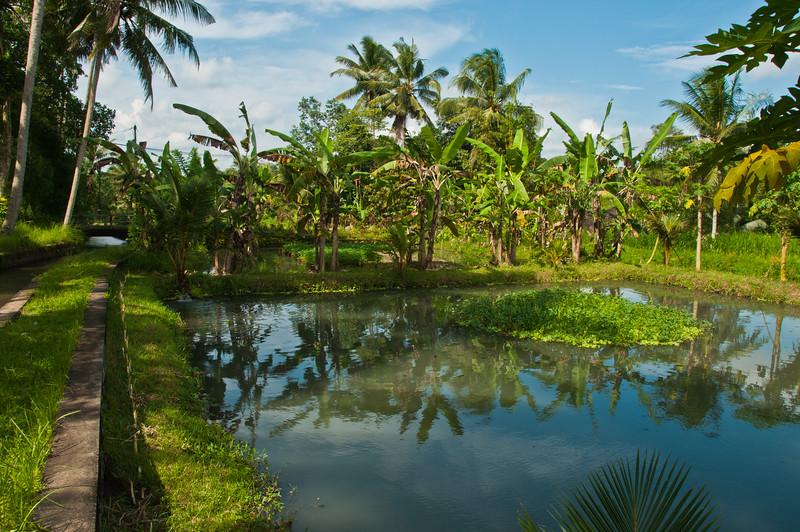 Bali - paddy field walk (27 of 31)