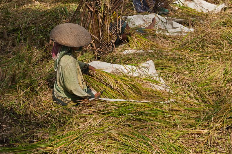 Bali - paddy field walk (25 of 31)