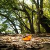 Fall leaf at Riverbend Park