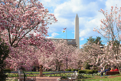 Washington DC in the spring bloom