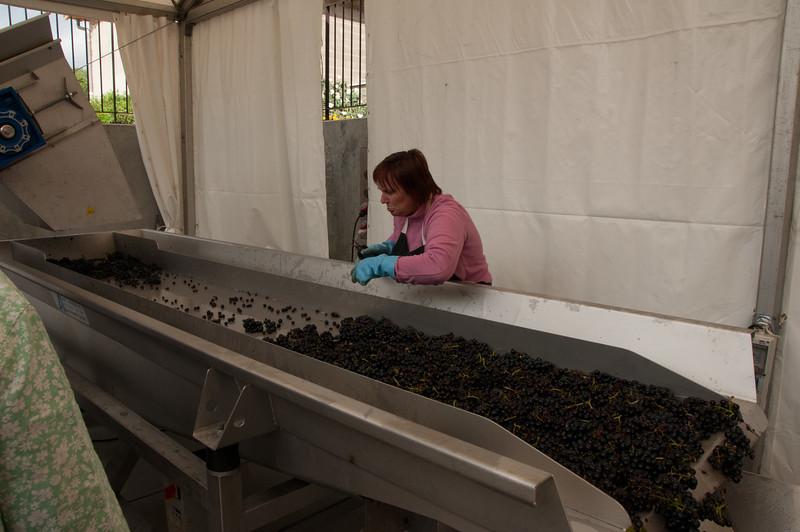 Charles Hastings Wine Club - Beaujolais 2012-6