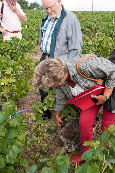 Charles Hastings Wine Club - Beaujolais 2012-3